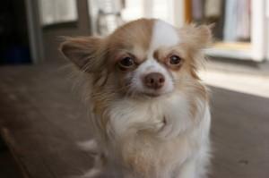 Most Destructive Dog Breeds Revealed