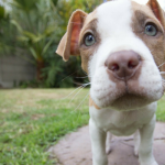 Puppy Socialization – Training Your New Dog