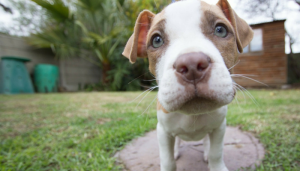 5 Simple Tips for Socializing Your New Dog
