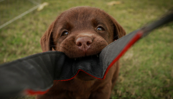 3 Methods That Will Keep Your Puppy From Biting Everything