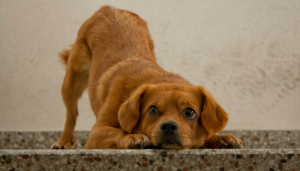 The 50 Most Popular Dog Names of 2013
