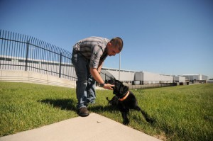 Marine Reunited with Military Dog