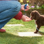 How to Get Started With Clicker Training Your Dog