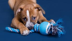 10 Easy to Make DIY Dog Toys