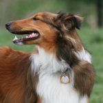 Does Your Dog Have Morals?  Research Points to Yes
