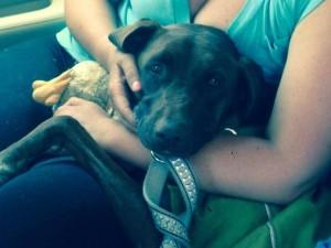 Missing Firefighters Dog Found Safe