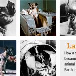 How a Stray Dog Became The First Animal to Orbit Earth
