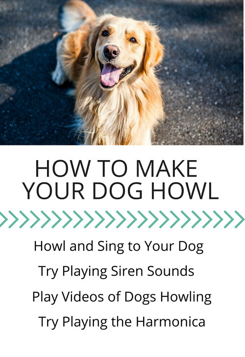 Sounds You Can Make To Your Dog To Communicate