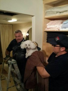 Dog Survives 16 Story Fall