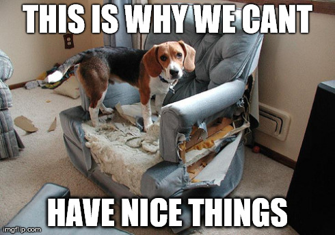 11 Dog Memes This Is Why We Can T Have Nice Things