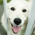 8 Ways You Can Help Shelter Animals Without Adopting