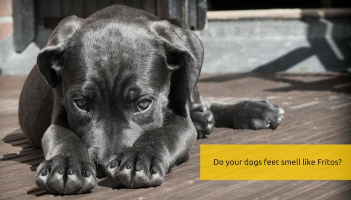Why Do Dog Feet Smell Like Fritos?