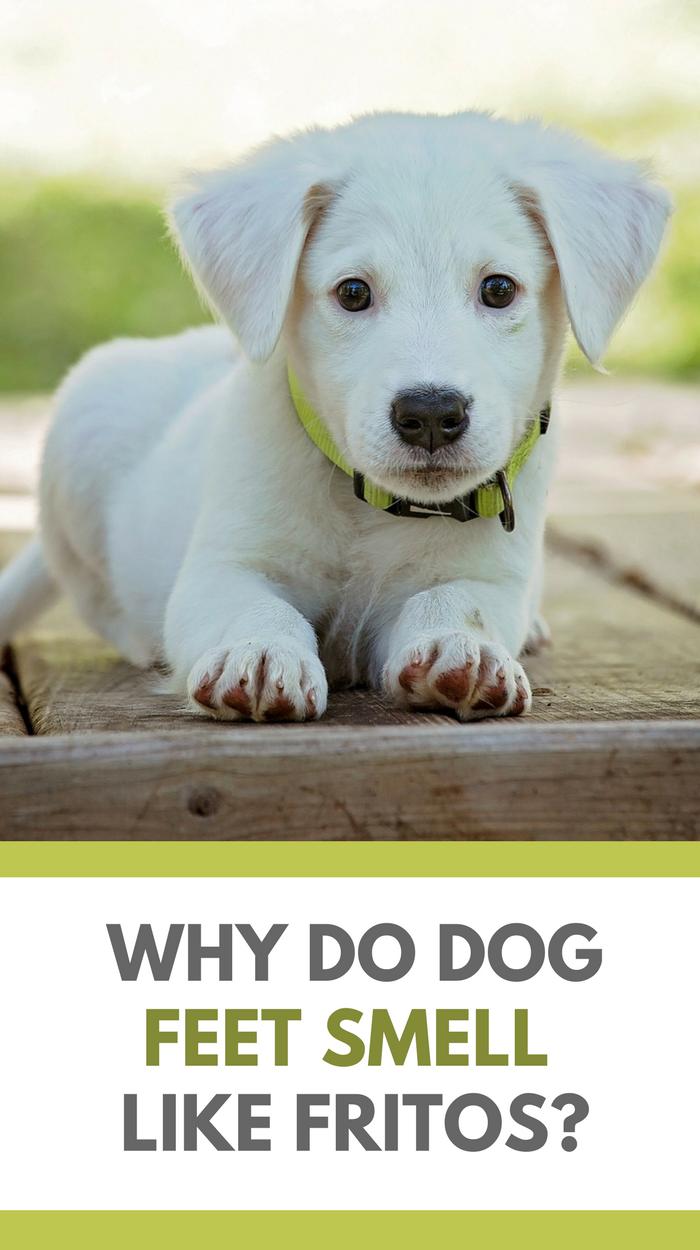 Why Do Dogs Feet Smell LIke Fritos?