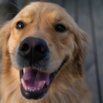 Dog Emotions – Do Dogs Have Feelings?