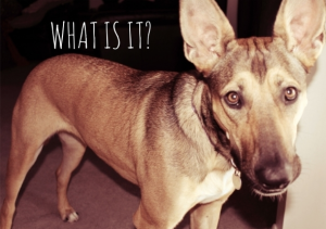 Why Are You Barking So Much – Sepia Saturday