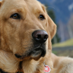 Dogs To Detect Breast Cancer In New Trial