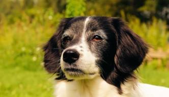 exercse senior dog