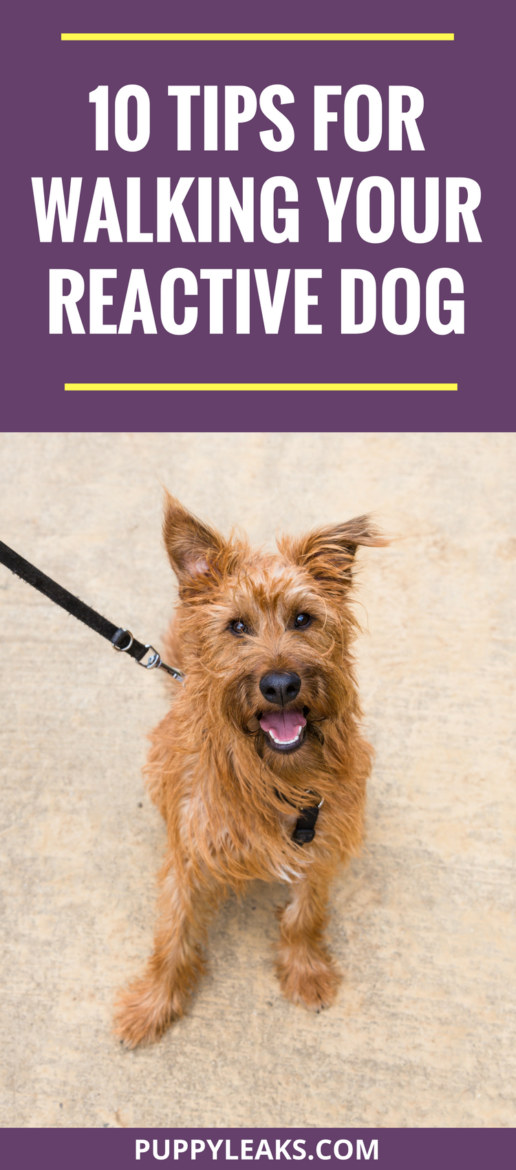 Is your dog reactive out on walks? Here's 10 tips to help you walk your reactive dog.