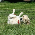 What To Do When Your Dog Gets Stung