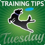 training tips tuesday