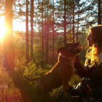 Safety Tips For Walking Your Dog During Hunting Season
