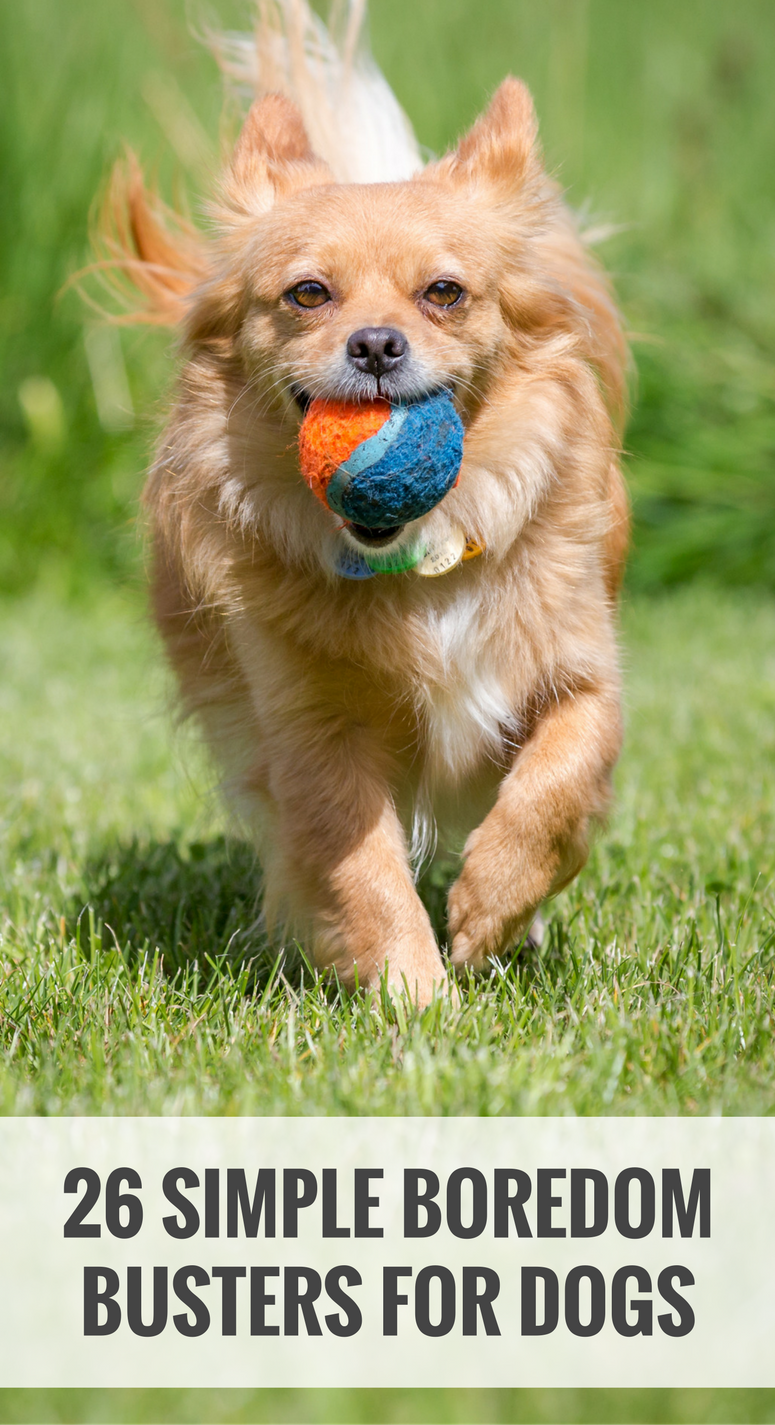 26 Simple Ways to Relieve Dog Boredom