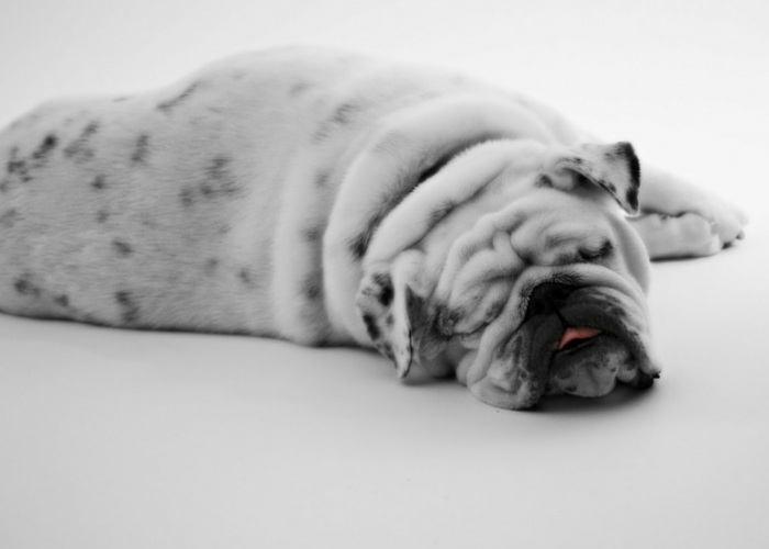 what's been done to bulldogs