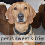 Cooper is seeking a new home in Michigan – Adopted!