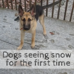 dogs seeing snow