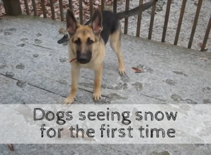 5 Funny Videos of Dogs Seeing Snow For The First Time