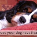 does your dog have fleas