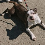 Adopt Lou Lou – Available In Hazel Park, MI – Adopted