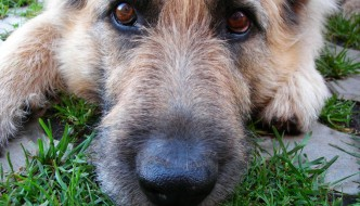 Is a Dogs Mouth Really Cleaner Than a Humans?