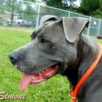 Meet Simone in Genessee County, MI – Adopted