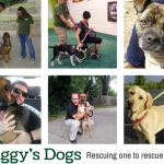 Stiggy's Dogs – Helping Dogs & Veterans Come Together