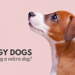 Clingy Dogs – Is Your Dog a Velcro Dog?