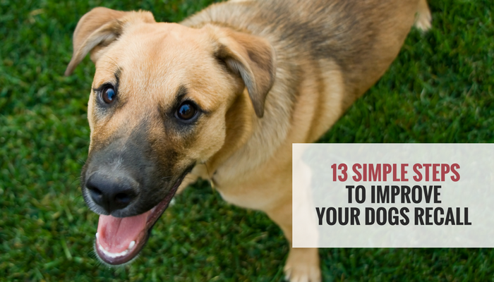 13 Simple Tips to Improve Your Dogs Recall