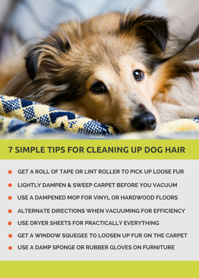7 Simple tips for cleaning up dog hair.