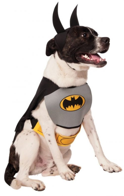 30 Fun Halloween Dog Costumes