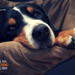 cleaning up dog hair efficiently