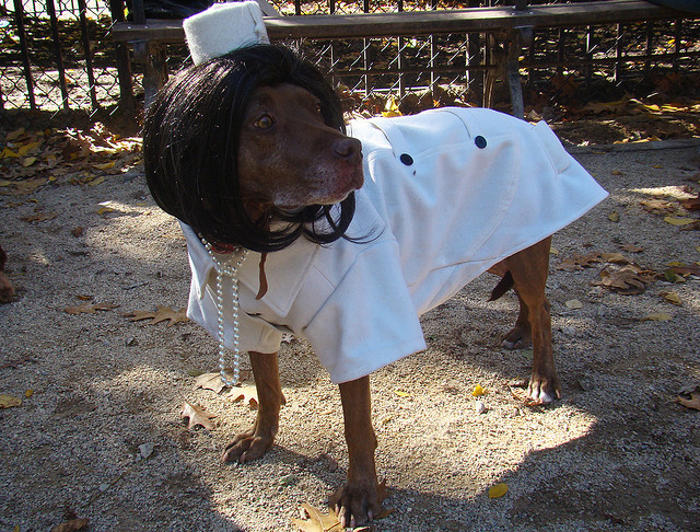 best dog costumes halloween