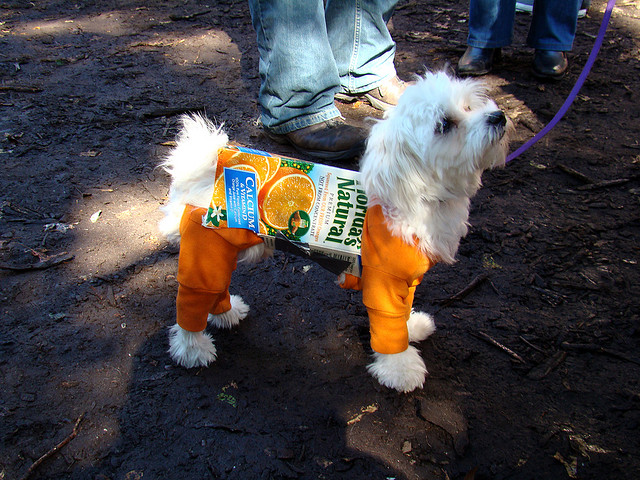 best dog costume halloween