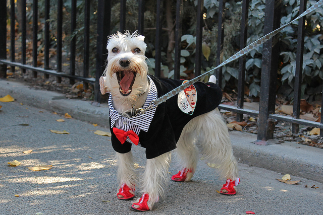 best dog costumes for halloween