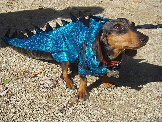 best dog halloween costume