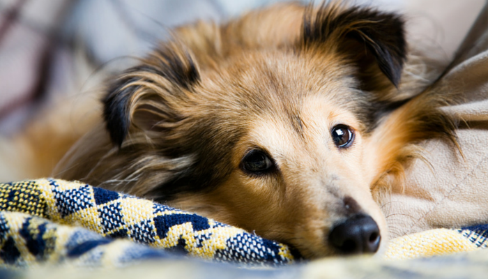 7 Simple Tips for Cleaning Up Dog Hair