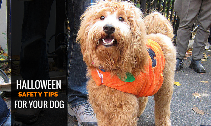 safety tips halloween dogs