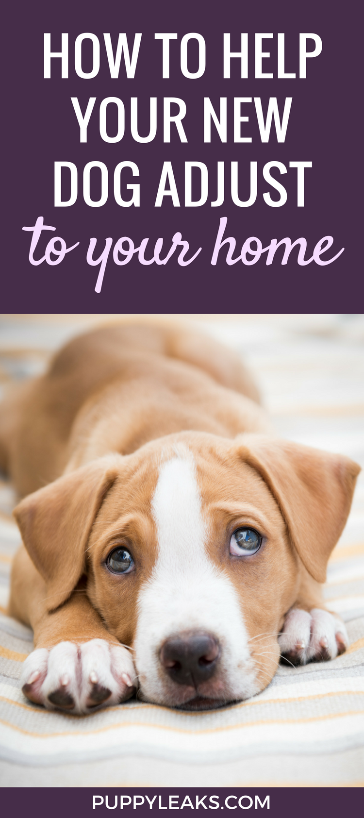 10 Tips for Helping Your Dog Adjust To Their New Home