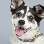 10 Tips to Help Your Adopted Dog Adjust to a New Home