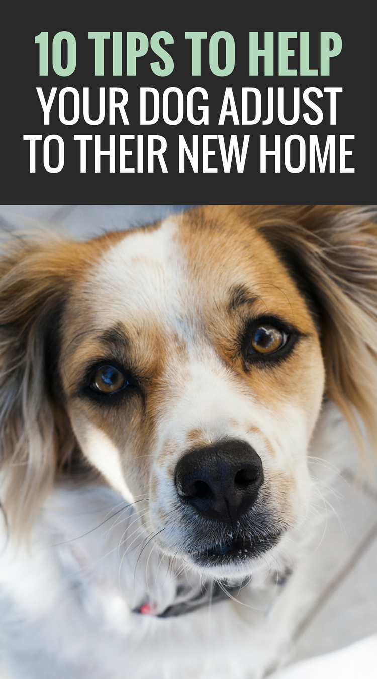 10 Tips to Help Your Dog Adjust to Their New Home