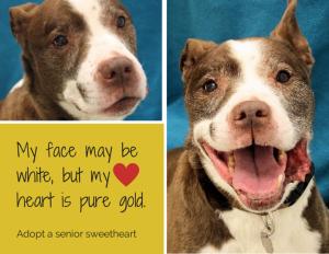 Sweet Walter – Older Male Seeks Cuddles – Adopted!